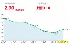 2018年12月10日山东昌邑、安丘黄姜(新姜)最新价格行情