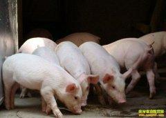 生猪价格回温 南北差异大 须密切关注生猪市场动向