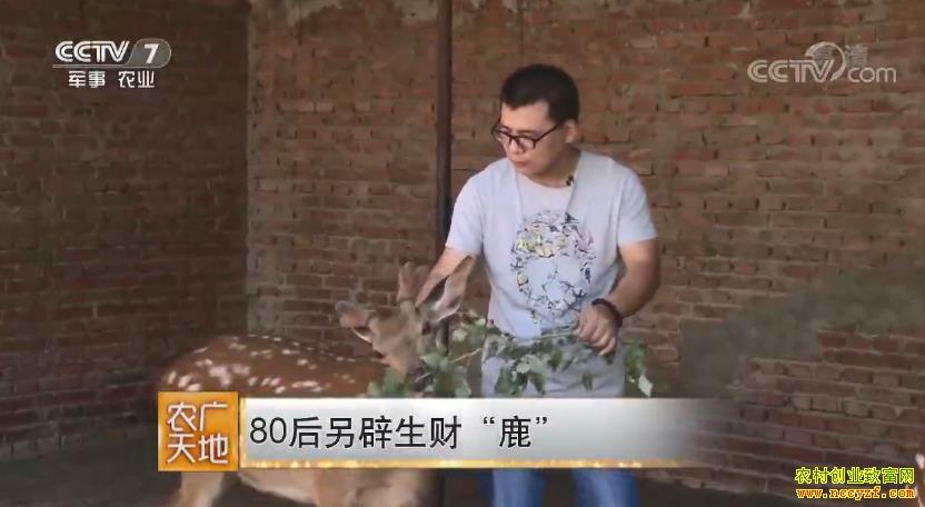 [农广天地]吉林长春刘伍权养鹿创造千万财富的秘籍