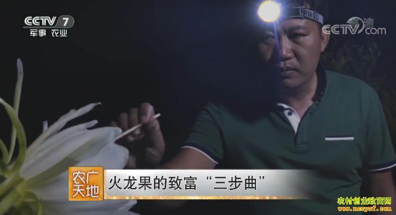 [农广天地]广西博白傅俊明种植火龙果的致富秘籍
