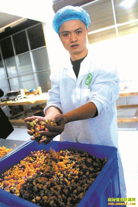 四川泸州市王建做七彩蔬菜面一年销售收入两百万