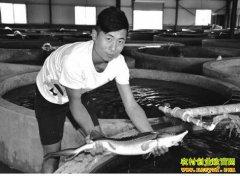 山东成武县大学生范昌爽返乡创业养殖鲟鱼走上致富路