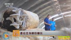 [农广天地]天津宁河区李子兴种植蘑菇变身翻倍赚钱