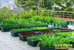 """微农业前景如何?城市中发展""""微农业""""好看又赚钱"""