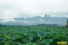 浙江江山张琪种植有机雪藕加工手工雪藕面畅销市场