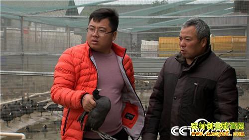 [致富经]湖南华容张涛养殖白骨顶鸡 一只最高能卖240元