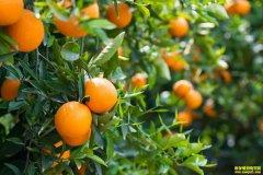 水果产业的未来发展方向!看看你能否抓住?
