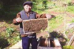 四川泸州张树云养蜂技术好 蜂蜜卖价高