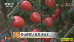 [农广天地]樱桃番茄大棚种植技术视频