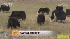 [农广天地]西藏牦牛育肥技术视频