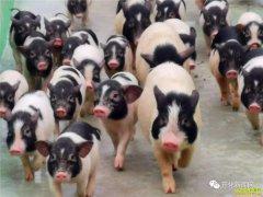 浙江衢州独臂夫妻苏宏星创办猪宝宝文化乐园