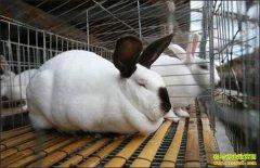 早春养兔子 这四点应注意