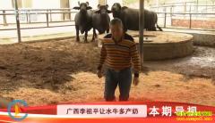[科技苑]让水牛多产奶 广西李祖平养殖奶水牛有高招