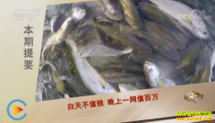 [致富经]这种鱼晚上一网值百万 浙江台州俞淳的黄鱼养殖致富经