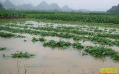 降雨影响中药材生产 2019年中药材行情走势如何?