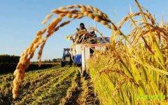 2019年农民能拿到什么补贴?粮食补贴会减少吗?