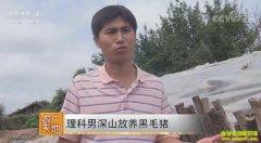 [农广天地]吉林临江理科男逄格龙深山放养黑毛猪