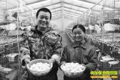 山东单县尘福丹、郭英夫妇人工孵化养肉鸽年入20万