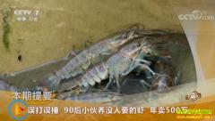 [致富经]广东汕头林振��养没人要的澳洲淡水龙虾年卖500万