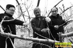 山东阳谷县仇士达种植8亩樱桃苗年收入80万