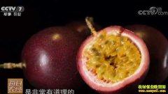 [每日农经]吃了还想再吃的水果 百香果种植效益好