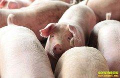 2019年3月11日全国生猪价格行情涨跌表