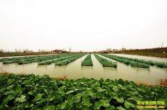 怎样养鱼能赚钱?五个新型水产养殖模式 你适合哪个?