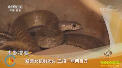 [致富经]四川德阳爱美女孩周红梅养蛇三招一年两百万