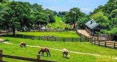 休闲农业有哪些可行的模式?