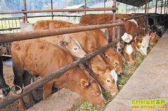 牛肉价格那么高,为啥养殖户却不爱养牛?养牛不赚钱吗?