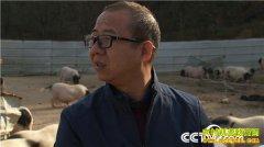 [致富经]一个习惯 年卖千万 广东新会方宏松养香猪财富满山跑