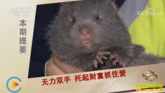 [致富经]残疾人创业干什么好?湖南江永何少平养殖竹鼠年销200