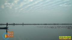 [每日农经]湖北洪湖:裹着青泥就卖的藕