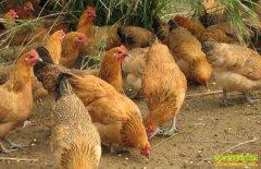 养殖业什么最赚钱?推荐两个养殖项目供养殖户参考