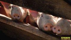 21省份非洲猪瘟疫区解除封锁!农业农村部:全面清理生猪屠宰企业