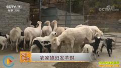 [农广天地]河南嵩县农家媳妇陈静晓养羊发羊财