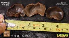 [每日农经]湖南永州:和雨水争时的黑木耳栽培效益好