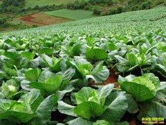 气温升高 蔬菜价格普遍回落