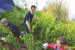四川内江大学生付生辉返乡创业种柑橘带乡亲走上致富路