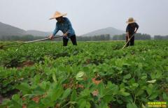 花生行情走势向好 今年种植花生能赚钱吗?