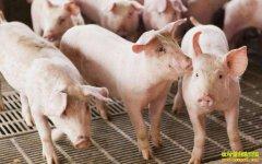 二季度猪价涨幅预计达20% 下半年生猪价格或将创新高