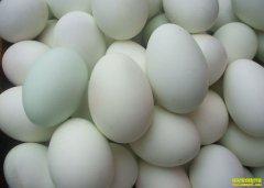 2019年4月25日全国鸭蛋价格行情涨跌表
