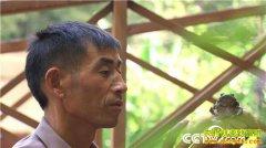 [致富经]江西上饶何金文四次创业落残疾只为深山养石蛙