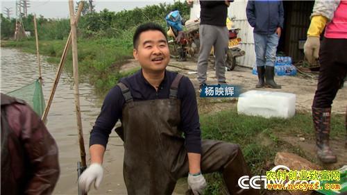 [致富经]广东珠海杨映辉养鱼靠一口缸让鱼的利润翻10倍