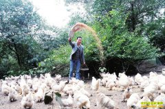 四川泸州杨攀返乡创业养殖乌鸡年收入30万