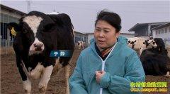 [致富经]天津患癌女人于静养奶牛创造牛财富