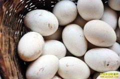2019年5月27日全国鹅蛋市场价格行情