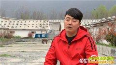 [致富经]陕西镇坪县肖辉深山养猪把破了相的猪卖高价