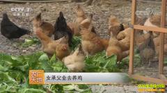 [农广天地]浙江临安葛雯承父业去养鸡年销千万