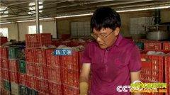 [致富经]海南儋州陈汉洲养殖海鸭子加工咸鸭蛋的赚钱秘诀